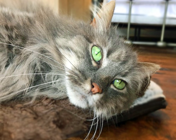 Sweet Pea – Our Cat of the Month